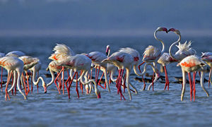 Pulicat Bird Sanctuary